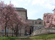 Lovely image of the Walters Art Museum with bright pink dogwood trees in the foreground on a beautiful spring day in Mount Vernon, Baltimore, MD
